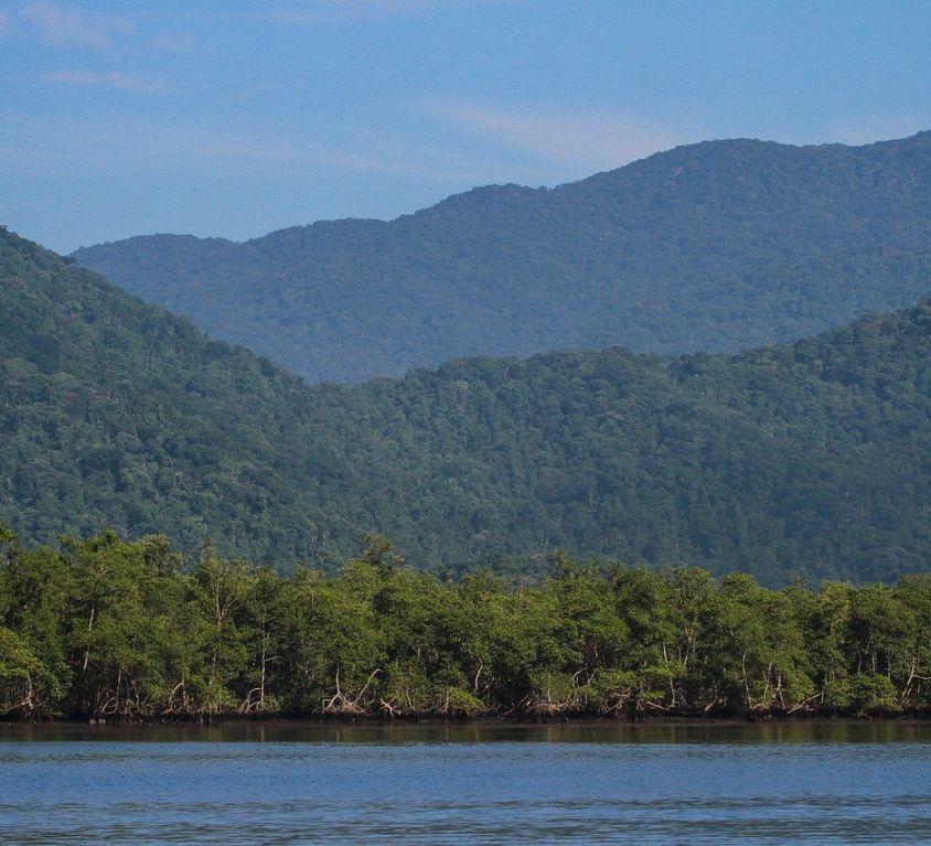 atlantic-forest-4569459_1280